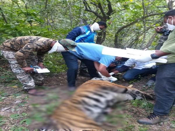 A pregnant female tiger found dead in Umred-Pauni-Karhandla Wildlife Sanctuary (Photo ANI)