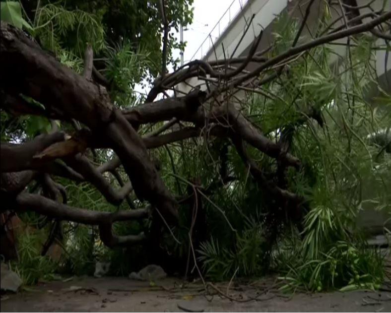 Trees fallen due to heavy storm in Delhi  [Photo/ANI]