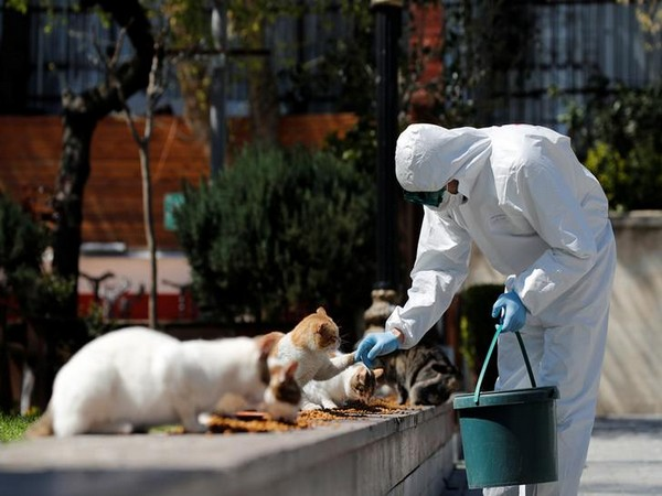 A municipality worker in a protective suit feeds street cats at Sultanahmet Square in Istanbul