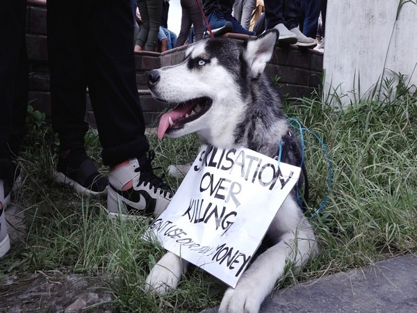 A canine at the protest against animal brutality in Nepal on Wednesday