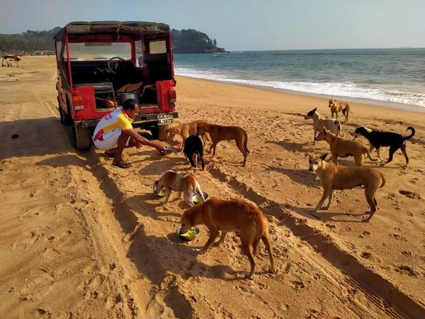 Goa's Drishti Marine lifeguards step in to feed stray animals.
