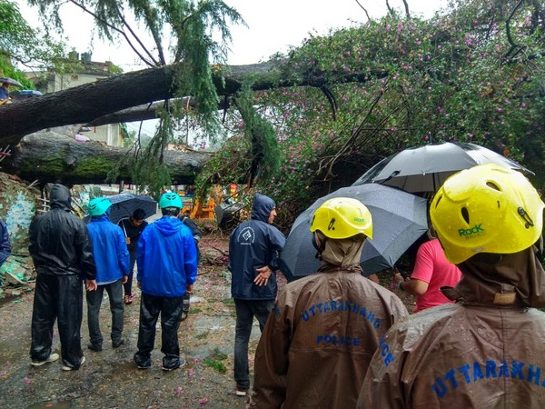 Over a century old Bougainvillea and cedar trees were dashed in Almora city of Uttarakhand on Wednesday. (Photo/ANI)