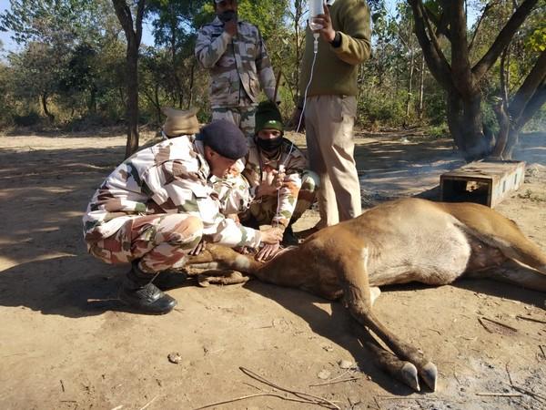 ITBP officials rescuing deer
