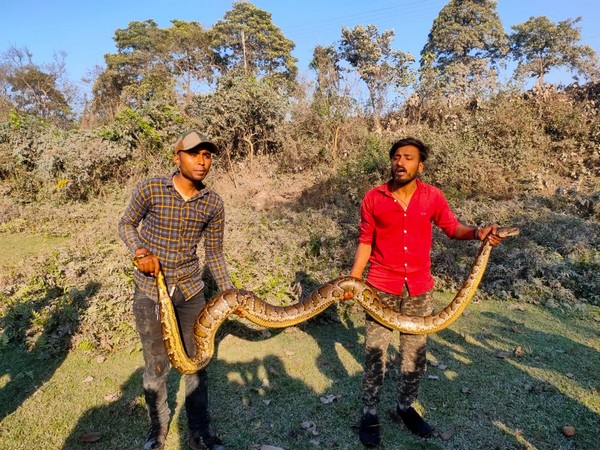 Burmese python rescued near Siliguri forest