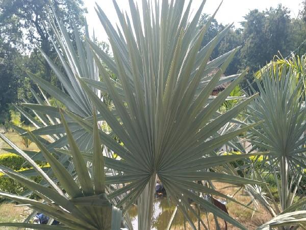 First Palmetum of Uttarakhand in Haldwani