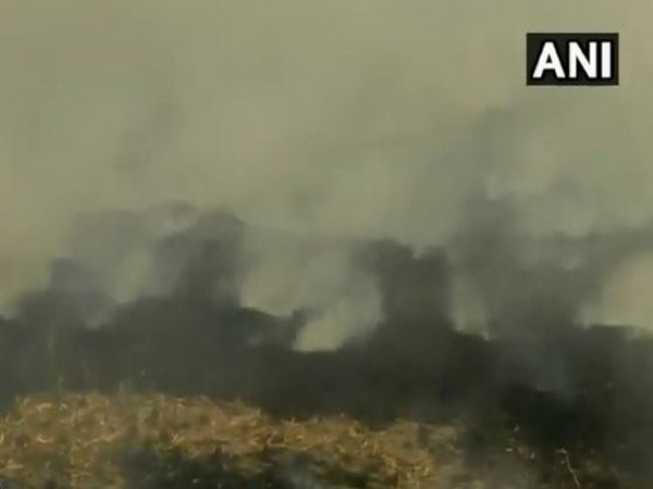 Stubble burning in Amritsar's Wadala Johal. (Photo/ANI)