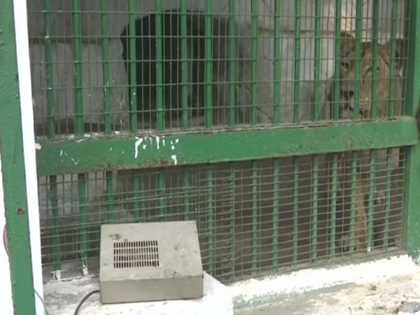 Heater outside the Lion enclosure at Ahmedabad Zoo