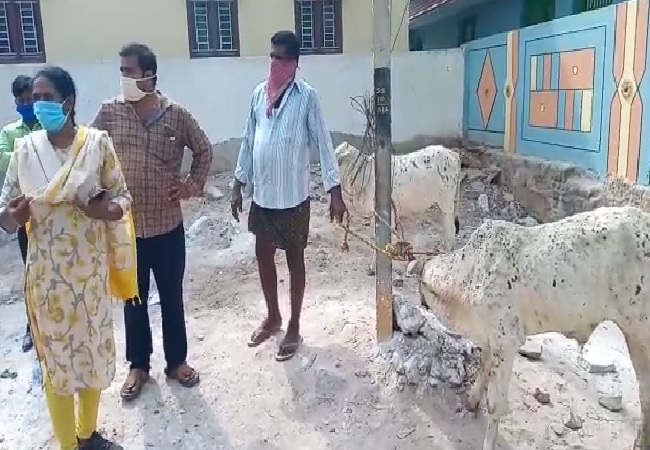 A visual from Krishna district in Andhra Pradesh where cows fell sick.