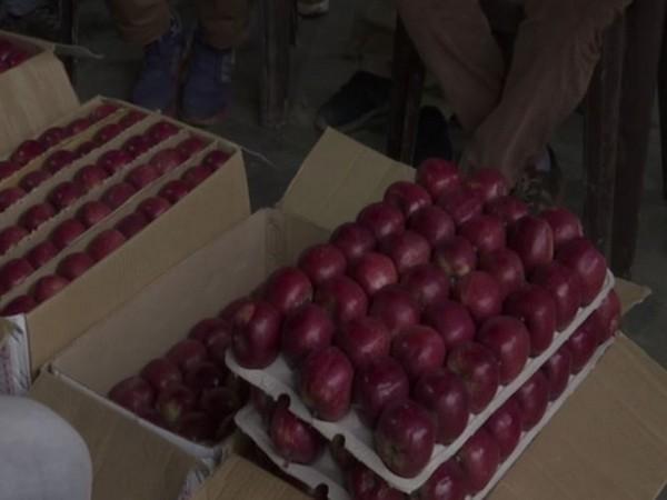 Apples in the Dhali market in Shima in Himachal radesh. Photo/ANI