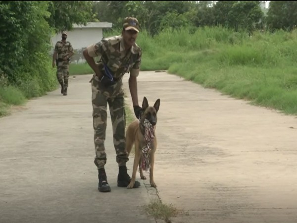 Polo, a Belgian Malinois dog of Central Industrial Security Force (CISF) (Photo/ANI)