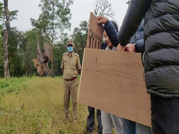 Authorities releasing Khaleej pheasants in the Mahananda wildlife sanctuary. (Photo/ANI)