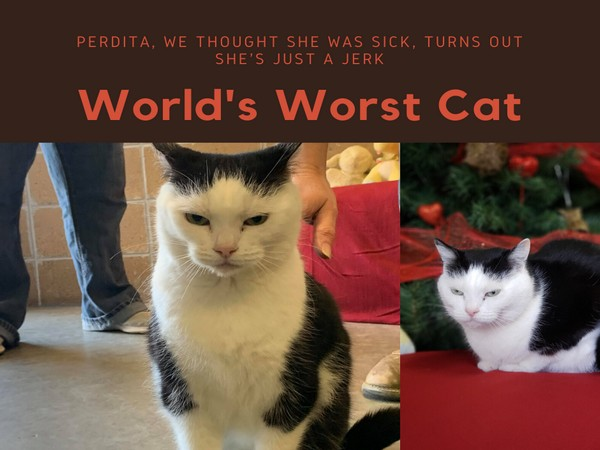 The shelter officials gave a rather hilarious description of Perdita on their Facebook page. (Picture courtesy: Facebook)