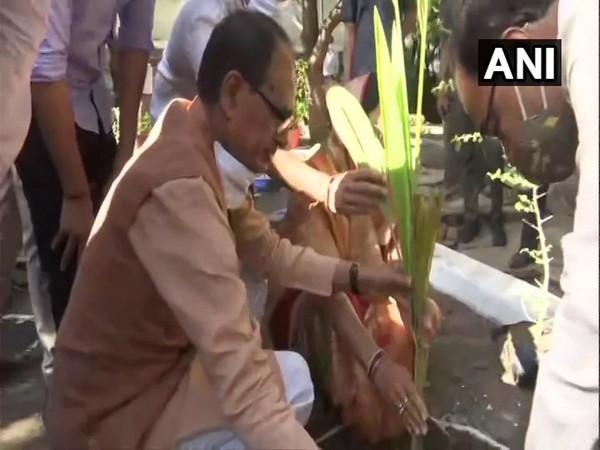 Madhya Pradesh CM Shivraj Singh Chauhan planting saplings at his residence (Photo/ANI)