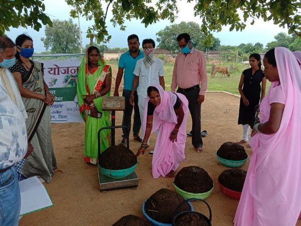 Nearly 82,711 quintals of cow dung have been procured from 46,964 out of a total of 65,694 registered beneficiaries. (Photo/ANI)