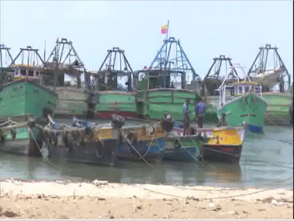 Mechanized boats lie idle during 61-day fishing ban in Tamil Nadu. Photo/ANI