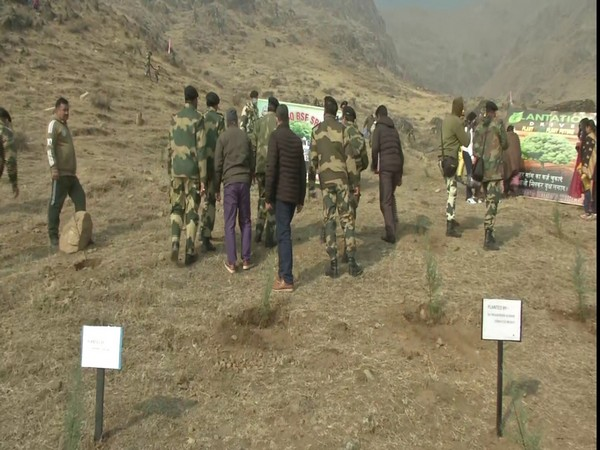 A visual of the tree plantation drive organised by BSF in Jammu and Kashmir.