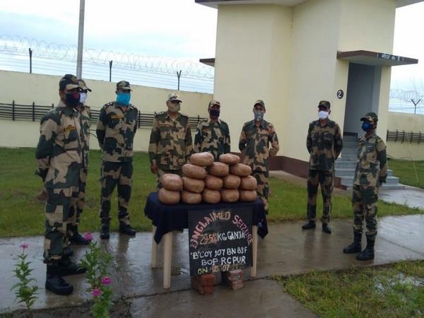 BSF seizes 31.5 kg Ganja, 360 bottles Phensedyl cough syrup being smuggled to Bangladesh. (Photo/ANI)