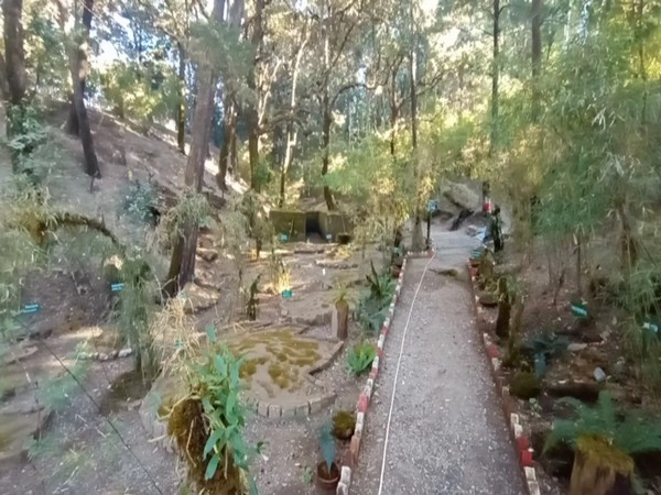 Visual from the moss garden in Nainital (Photo/ANI)