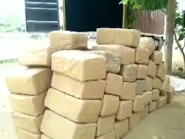 Visakhapatnam Police held two people with over 600 kg cannabis on Friday. (Photo/ANI)