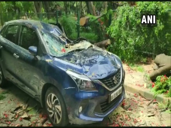 Car crushed under a tree at Cubbon Park in Bengaluru (Photo/ANI)