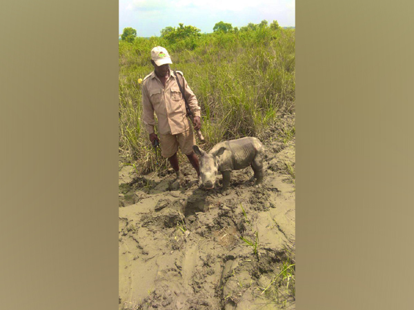 4-day old rhino calf rescued by officials in the Kaziranga National Park