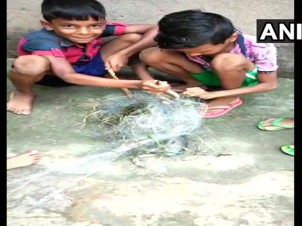 Children rescue a non-venomous snake that trapped in a fishnet in Uthaninuagaon village