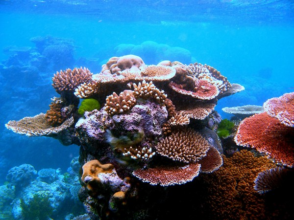 Coral outcrop reef