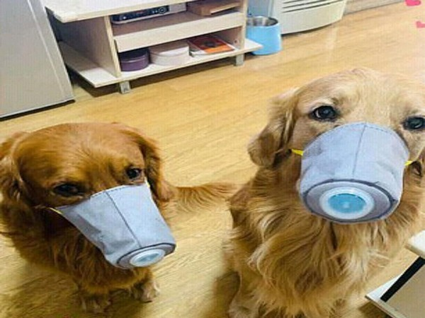 The masks were originally purposed for protecting the pooches from polluted air (Picture Courtesy: Twitter)
