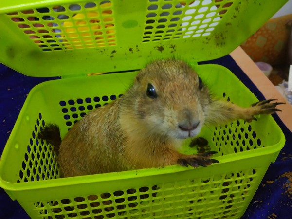 One of exotic animals recovered from the smuggler at Chennai International airport. Photo/ANI