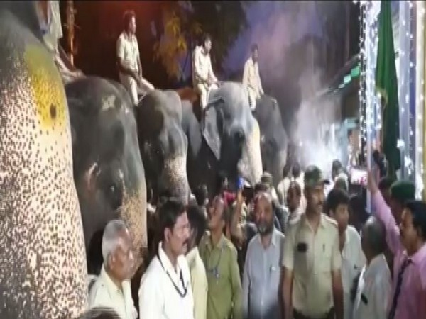 Elephants are being prepared for Jaboswari procession in Mysore. (Photo/ANI)