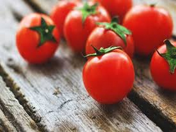 Tomato-rich diet, key to fight prostate cancer: Study