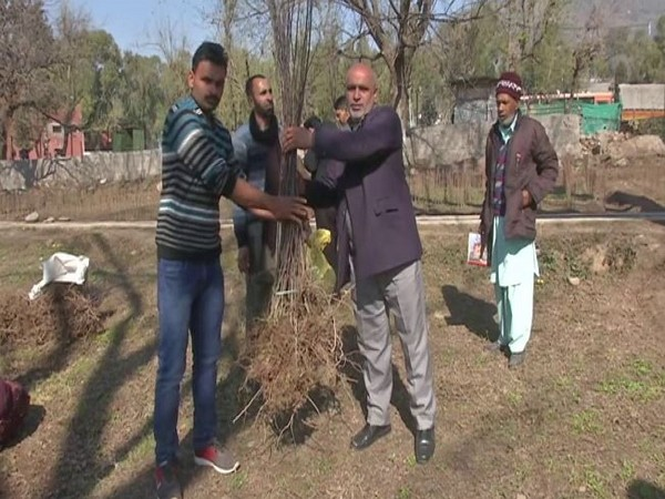 Horticulture department provides fruit plants at subsidised rates to farmers in Poonch. (Photo/ANI)