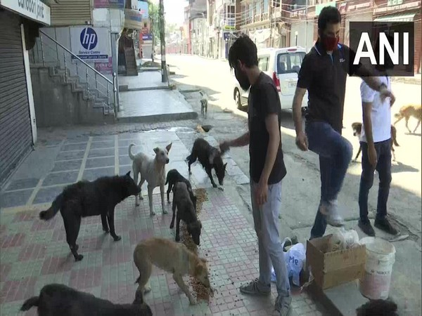NGOs Healing Pat and Welfare For Kashmir Animals working together to feed at least 1000 dog per day in Srinagar city and other parts of Kashmir Valley. Photo/ANI