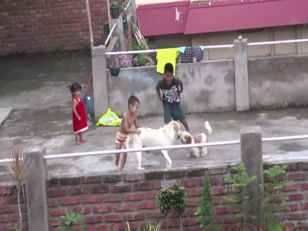Children in Kohima, Nagaland playing with dogs. (Photo/ANI)