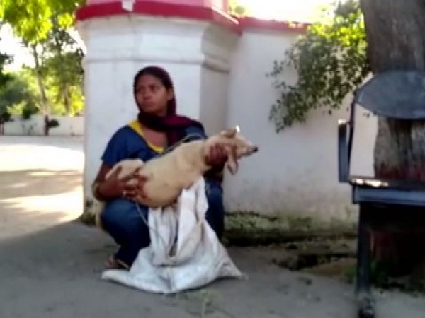 Sunita with the body of her dog in Aligarh, Uttar Pradesh on Friday. Photo/ANI