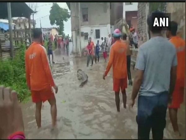 A crocodile was rescued by NDRF team from a flooded area on Saturday. Photo/ANI