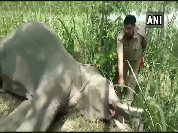 The elephant was 20 years old. Photo/ANI