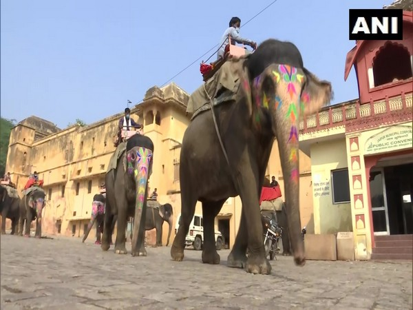 A visual of elephant ride in Jaipur's Amer Fort. (Photo/ANI)