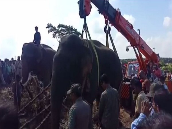 The wild elephant which killed several people in the past couple of months was captured on Monday and taken into custody.