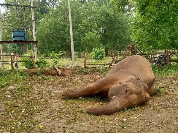 A visual of the dead elephant