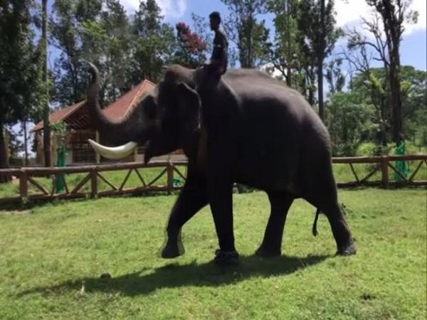Elephant at Dubare Elephant Camp in Kodagu, Karnataka.
