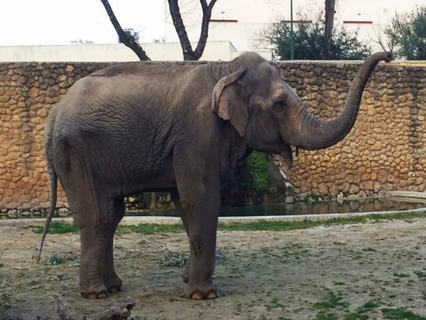 Flavia the world's 'saddest elephant'. (Image courtesy: Facebook)