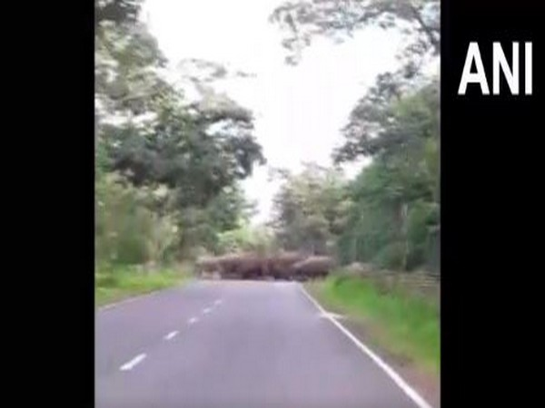 A herd of elephants walk down the road that connects Dhamtari to Odisha. [Photo/ANI]