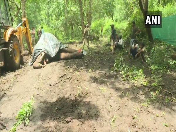 A male elephant had died due to Herpes virus infection in August in the Sakrebyle elephant camp. Photo/ANI
