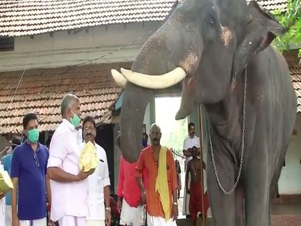 A herd of elephants entered the paddy fields in Srikakulam on Wednesday. Photo/ANI