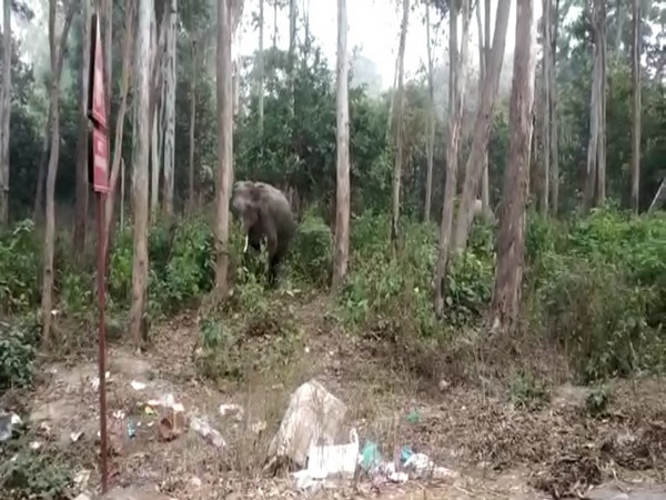 Terai Central Forest Division is planting vegetation favoured by elephants (Photo/ANI)