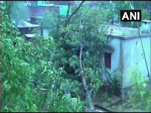 Trees uprooted in the Puri district as Fani makes landfall