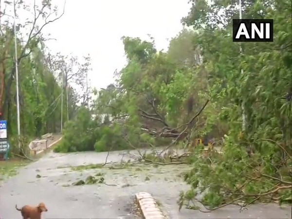 Several trees were uprooted in Bhubaneswar due to cyclone Fani