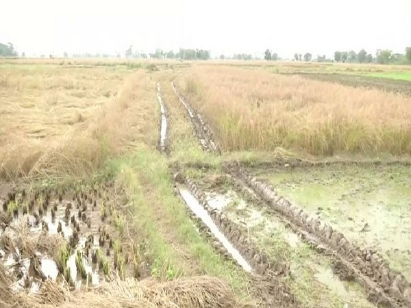Around 35-40 per cent crop loss has been reported from Samba district in Jammu and Kashmir. Photo/ANI