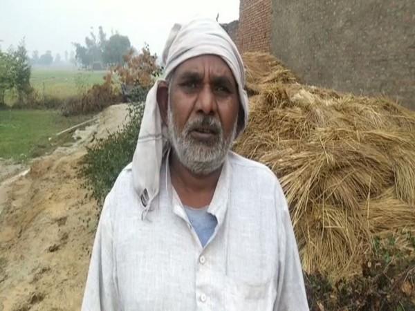 Unseasonal rain and hailstorm damages wheat crops in Rohtak. Photo/ANI